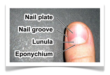 Nail Care Fingernail Label
